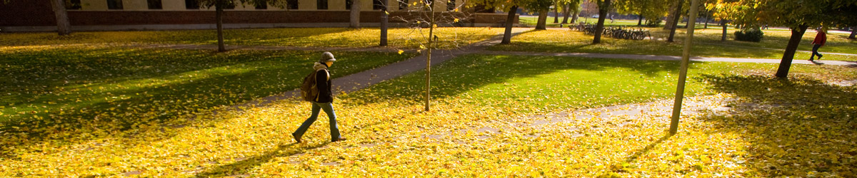A student walks across campus surrounded by bright yellow leaves.